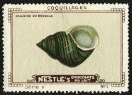 Nestle Serie V No 01 Coquillages