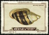 Nestle Serie V No 02 Coquillages