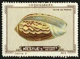 Nestle Serie V No 05 Coquillages